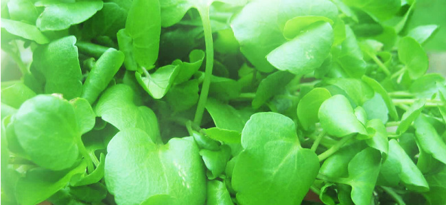 edited Watercress