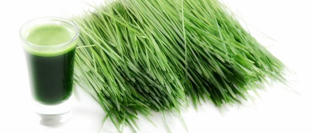 wheatgrass juice gargle - purggo